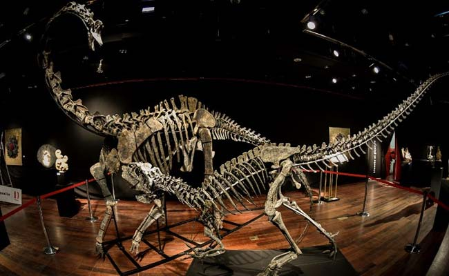 Anonymous Buyer Pays Over $3 Million For 2 Dinosaur Skeletons