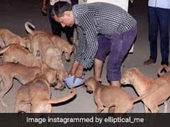 गुजरात के इस गांव में हर कुत्ता है करोड़पति, जानें क्या है वजह