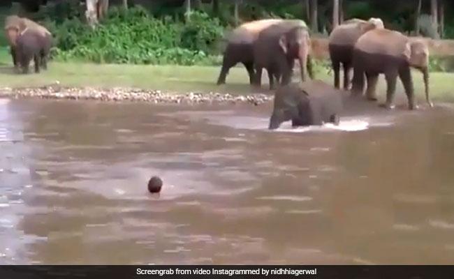 VIDEO: नदी में तैर रहा था शख्स, हाथी ने देखा तो कूद पड़ा उसे बचाने