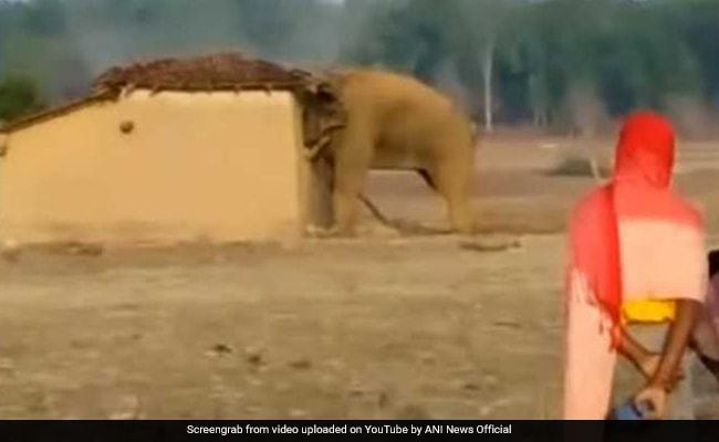 VIDEO: गांव में घुसा गुस्साया हाथी, घर में घुसा और कर दिया ऐसा हाल