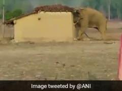 Four Elephants Killed Instantly After Speeding Train Hits Them In Odisha