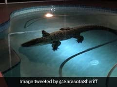 11-Foot Alligator Enjoys Late Night Swim In Family's Pool. Watch