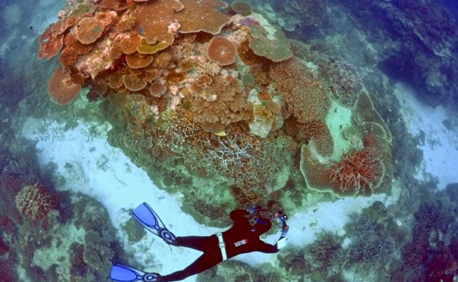 Australia Announces $379 Million Funding For Great Barrier Reef