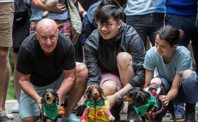 Hong Kong 'Doggie Dash' Raises Funds For Abandoned Pooches