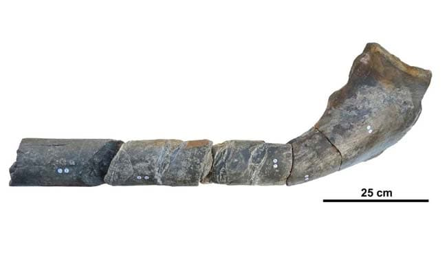 Huge Jawbone indicates Ancient marine Reptiles were as Big as Blue Whales