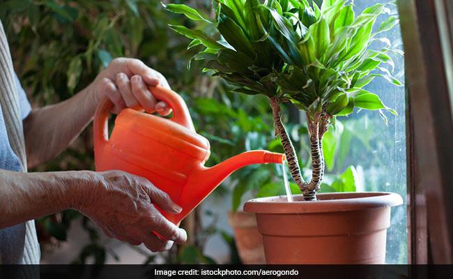 बाहर नहीं, घर के अंदर पौधे लगाने के हैं ये 3 अमेंजिग फायदे
