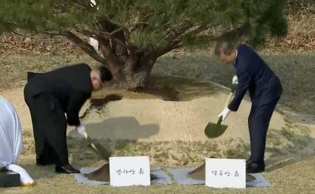 North Korea's Kim, South Korea's Moon Plant Tree For Peace At Border