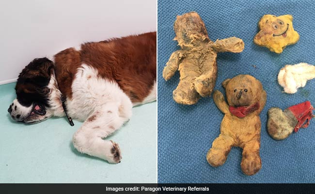 Family Thought Their Dog Had Cancer. It Turned Out To Be Teddy Bears