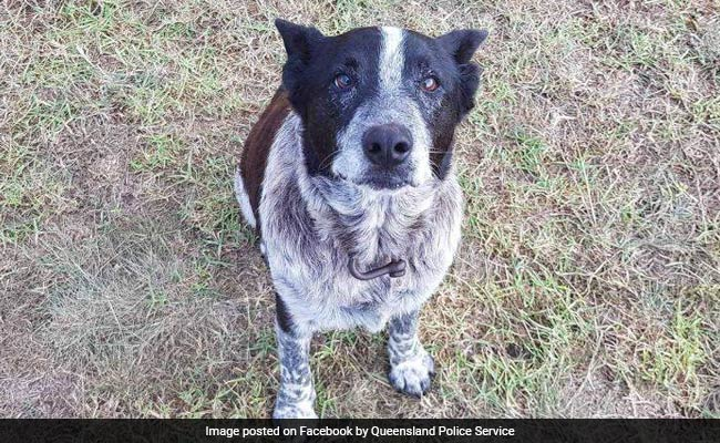 Elderly Dog Stays With Lost 3-Year-Old Through The Night, Leads Rescuers To Her