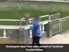 VIDEO: बंदर ने ऐसे लिया शख्स से बदला, फेक दिया था नदी में