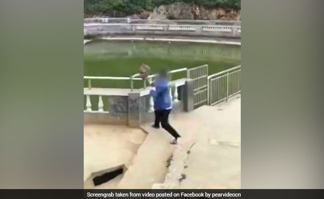 Man Pushes Monkey Into Water 'For Fun.' Watch Why It Was A Really Bad Idea