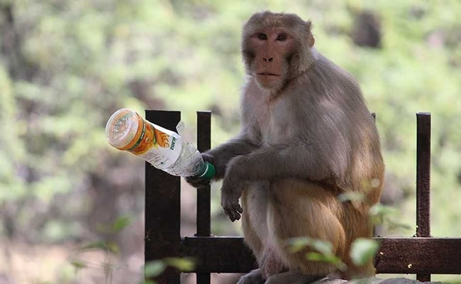 Five Member Panel To Deal With Menace Of Stray Dogs, Monkeys In Delhi