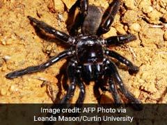 World's Oldest Known Spider Dies - Of Wasp Sting