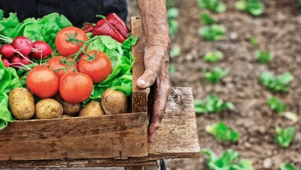 World Health Day 2020: 4 Health Benefits Of Switching To Organic Food
