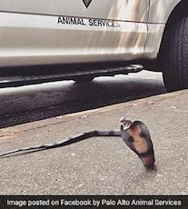 Officers Get Called For Deadly Rattlesnake. It Was A Toy Cobra