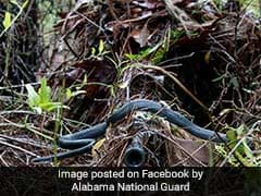 Snake Slithers Over Sniper's Gun In Viral Pic. He Stays Perfectly Still