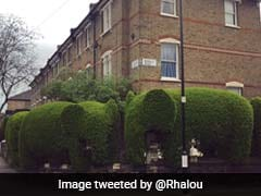 Elephant-Shaped Hedges Are Helping One UK Man Raise Money For Charity