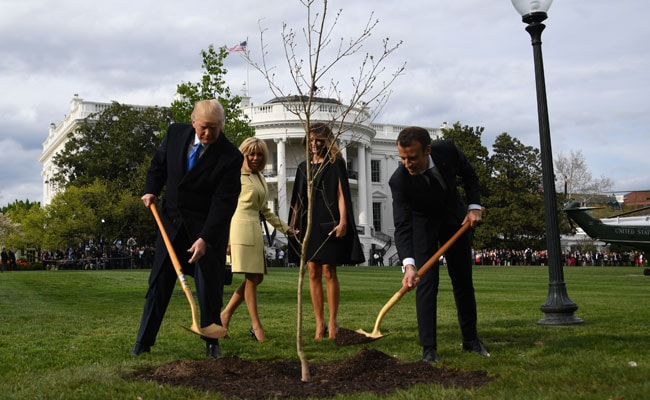 White House tree planted by Trump, Macron disappears