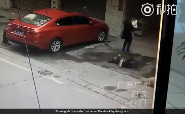 Woman Left Unconscious After Dog Falls On Her. Watch Shocking Video