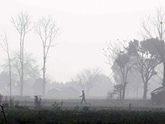 Air Pollution Cuts Average Indian's Life Expectancy By 4 Years: 5 Foods To Combat Air Pollution