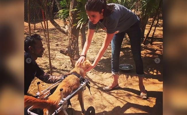 Birthday पर अनुष्का शर्मा का रिटर्न गिफ्ट, असहाय पशुओं के लिए बनाएंगी घर