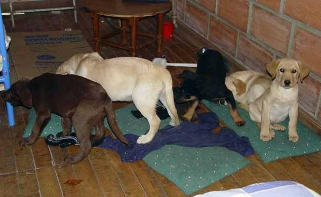 Veterinarian accused of smuggling heroin in puppies to New York City