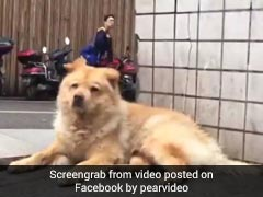 Loyal Dog Waits At Station Daily For His Human. Internet Loves Him For It