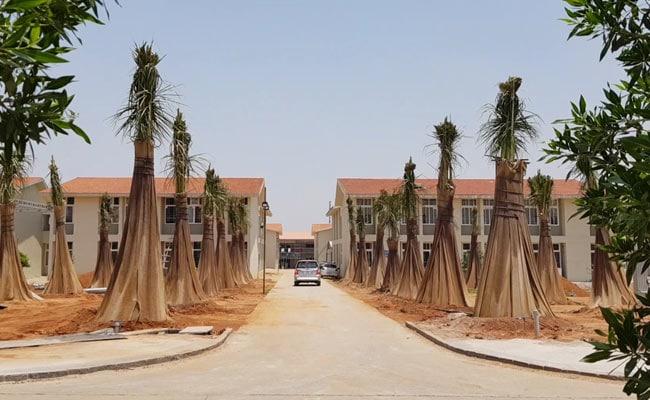 kanha shantivanam trees