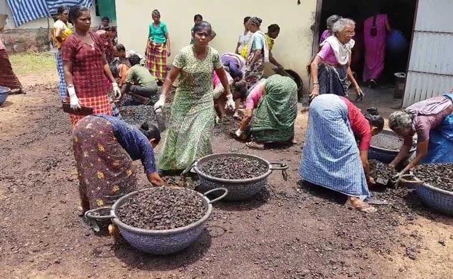 काजू की कीमत सुन डर जाते हैं, लेकिन भारत का एक शहर जहां आलू-प्याज से सस्ता है काजू