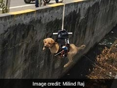 Lucknow Man Saw Puppy Trapped In Drain, Says He Used Drone To Save It