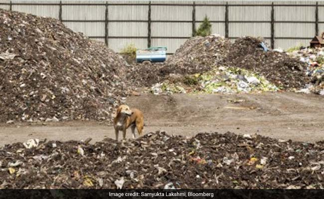 Stray Dogs Are Killing Children In India, Scientists Want To Find Out Why