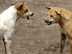 Dogs Maul 7-Year-Old Girl To Death In Uttar Pradesh