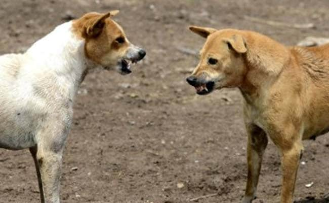 Packs of feral dogs kill six children in northern India