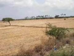 Amid Cauvery Row, Farmers In Parched Tamil Nadu Are Worried About Future