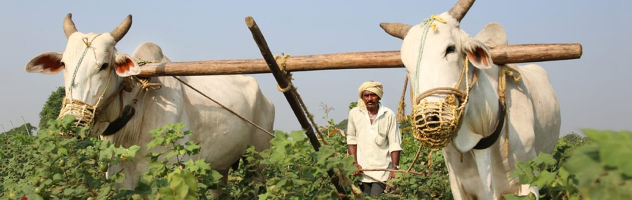 Small and Marginal Farmers In Urgent Need Of Credit