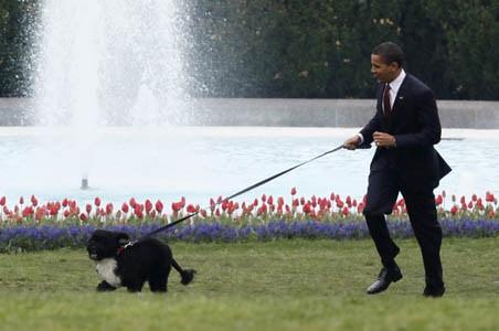 Barack Obama's Family Dog Bo, A Star Of The White House, Dies