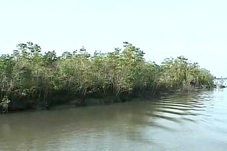 "Bangladesh's Power Plants Put Sunderbans On ""Sites In Danger"": Report"