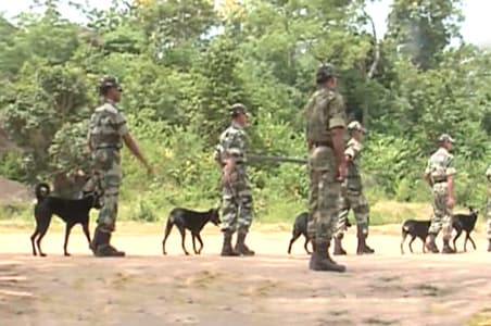 Stray dogs sniff out explosives in Chhattisgarh