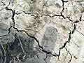 Parts of Bihar, Jharkhand drought-hit