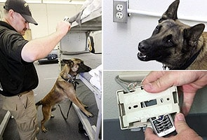 Dogs trained to sniff out prison cell phones
