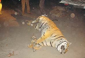Why this tiger's death has Assam worried