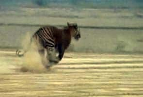 Govt gives 'in principle' nod for 5 new tiger reserves