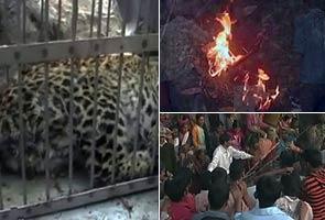 Leopard burned alive in Uttarakhand