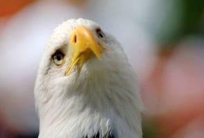 Eagle webcam becomes Internet sensation