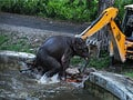 How a baby elephant was rescued from water tank