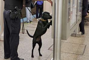 Bomb-sniffing dogs named after 9/11 victims