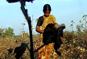 Women farmers who commit suicide ignored by state