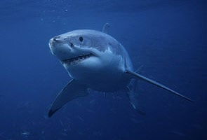 Man saved by a shark after drifting in the Pacific for 15 weeks