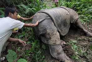 Rhino poacher arrested in Assam, confesses to militants' involvement
