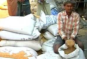 Rajasthan Governor seeks Food Corporation of India report on complaints of poor quality wheat